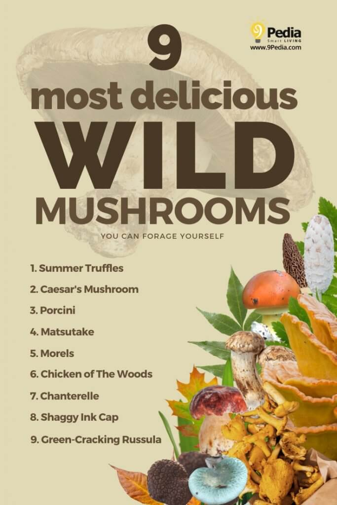 Most Delicious Wild Mushrooms You Can Harvest Yourself